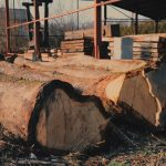 We cut, salvage and sell logs